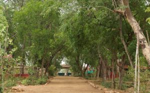 the main road_green